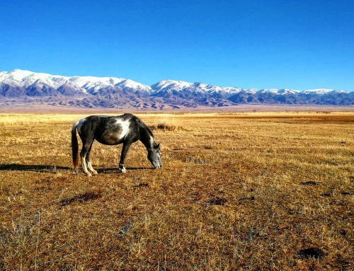 KAZAKHSTAN /// Zharkent and South Alatau Mountains